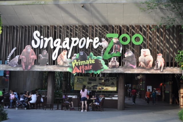 Сингапурский зоопарк и Ночное Сафари (Singapore Zoo and Night Safari)